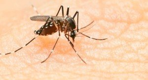 Tantarii transmit Virusul Zika